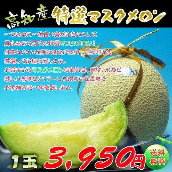 高知県産 マスクメロン1玉