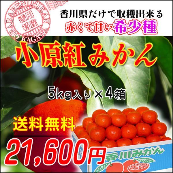 香川県産のさぬき紅みかん 小原紅早生みかん20kg お歳暮やギフトに