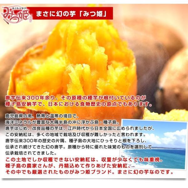 鹿児島県より産地直送 種子島安納紅「みつ姫」 約1.8キロ 送料無料 さつまいも 唐芋 からいも カライモ|sanchokudayori|05