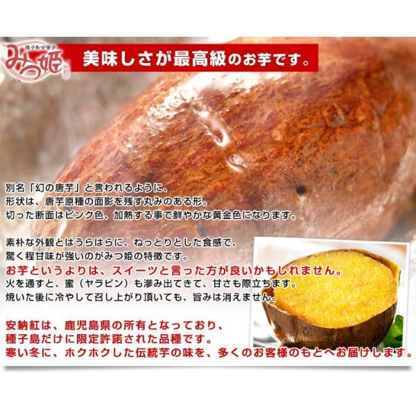 鹿児島県より産地直送 種子島安納紅「みつ姫」 約1.8キロ 送料無料 さつまいも 唐芋 からいも カライモ|sanchokudayori|06