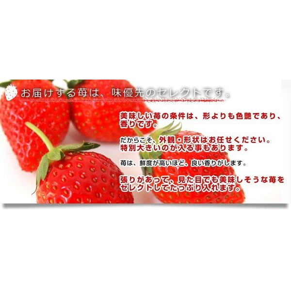 栃木県より産地直送 渡辺さんちのTちゃんいちご(栃乙女) 350g以上  3Lサイズ(9粒から15粒) 送料無料  苺 イチゴ  ※クール便発送|sanchokudayori|07