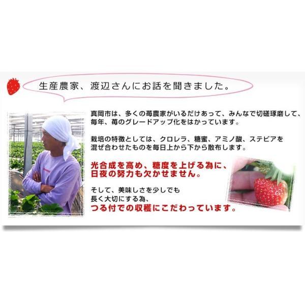 栃木県より産地直送 渡辺さんちのTちゃんいちご(栃乙女) 350g以上  3Lサイズ(9粒から15粒) 送料無料  苺 イチゴ  ※クール便発送|sanchokudayori|08