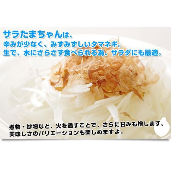 送料無料 熊本県より産地直送 JAあしきた サラたまちゃん 規格外 (訳あり品) 約10キロ  玉葱 タマネギ|sanchokudayori|03