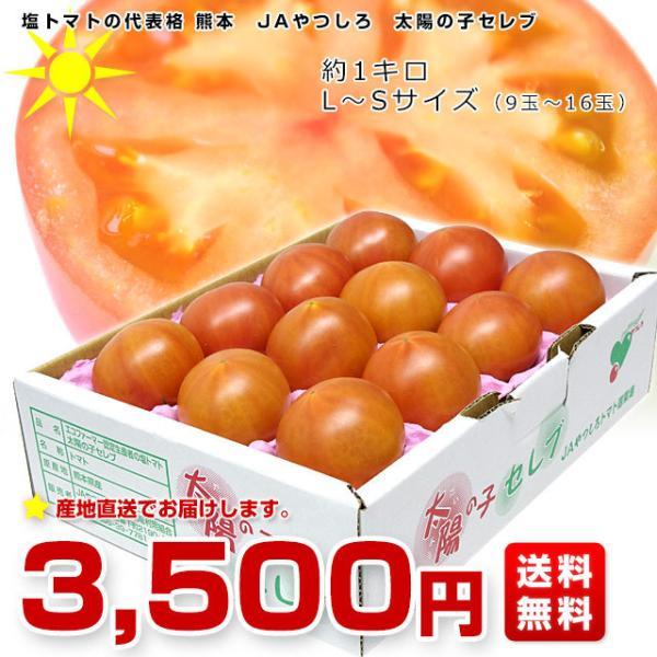 熊本県より産地直送 JAやつしろ 太陽の子セレブ フルーツトマト 約1キロ MからSサイズ(11玉から16玉)  送料無料 とまと|sanchokudayori|02