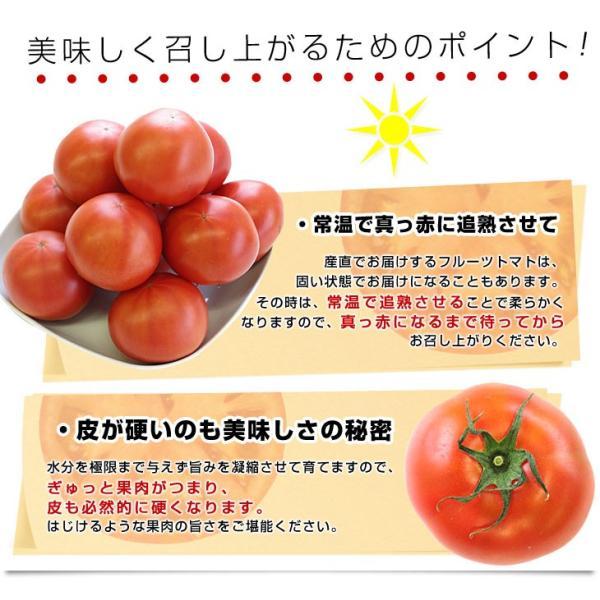 熊本県より産地直送 JAやつしろ 太陽の子セレブ フルーツトマト 約1キロ MからSサイズ(11玉から16玉)  送料無料 とまと|sanchokudayori|05