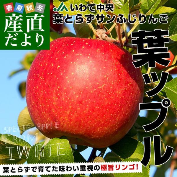 岩手県より産地直送 JAいわて中央 葉とらずサンふじりんご 葉ップル 5キロ(14玉から20玉) 林檎 リンゴ 送料無料 御歳暮 お歳暮 ギフト