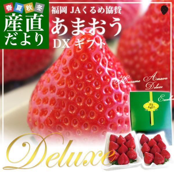 送料無料 福岡県より産地直送 JAくるめ あまおういちご DX:ギフト用デラックス 約540g(270g×2パック) 苺 いちご イチゴストロベリー|sanchokudayori