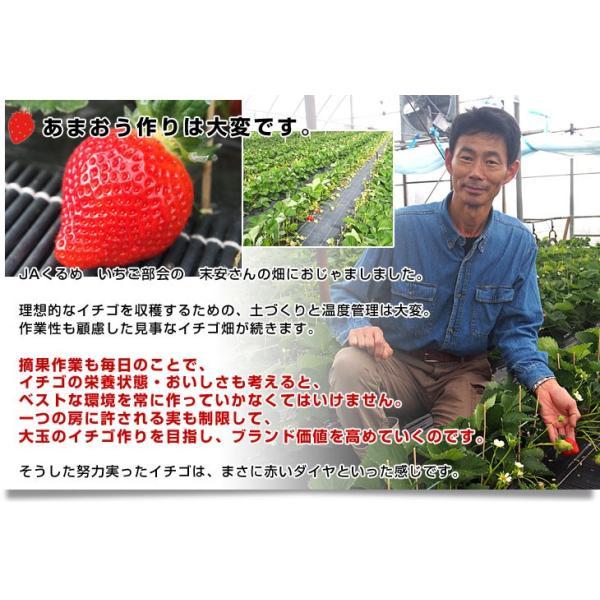 送料無料 福岡県より産地直送 JAくるめ あまおういちご DX:ギフト用デラックス 約540g(270g×2パック) 苺 いちご イチゴストロベリー|sanchokudayori|04