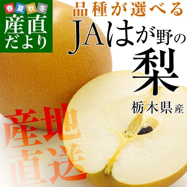 栃木県より産地直送 JAはが野の梨 (大玉限定) 優品以上 約5キロ (8玉から14玉) なし ナシ 送料無料