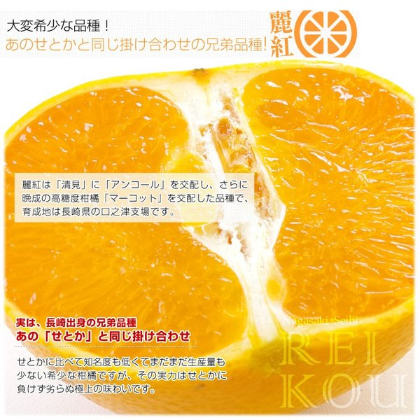 長崎県より産地直送 JA長崎せいひ 麗紅 (れいこう) 3LからLサイズ 優品以上 2.5キロ (10玉から15玉) 送料無料 柑橘 オレンジ れいこうかん sanchokudayori 04
