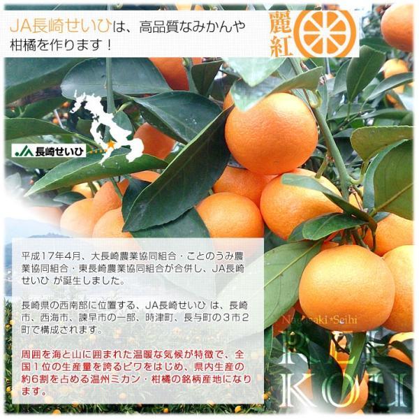 長崎県より産地直送 JA長崎せいひ 麗紅 (れいこう) 3LからLサイズ 優品以上 2.5キロ (10玉から15玉) 送料無料 柑橘 オレンジ れいこうかん sanchokudayori 05