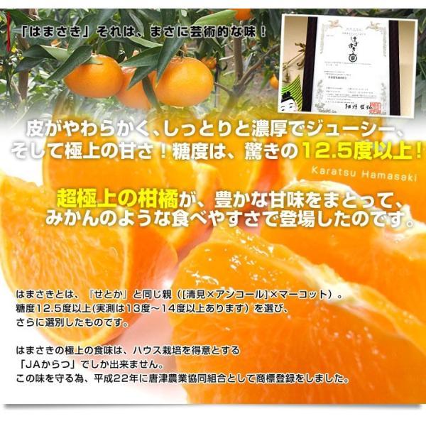 佐賀県より産地直送 JAからつ はまさき ご家庭用 ちょっと訳あり LからSサイズ 約2.5キロ (12から18玉前後)  送料無料 柑橘 オレンジ みかん sanchokudayori 04