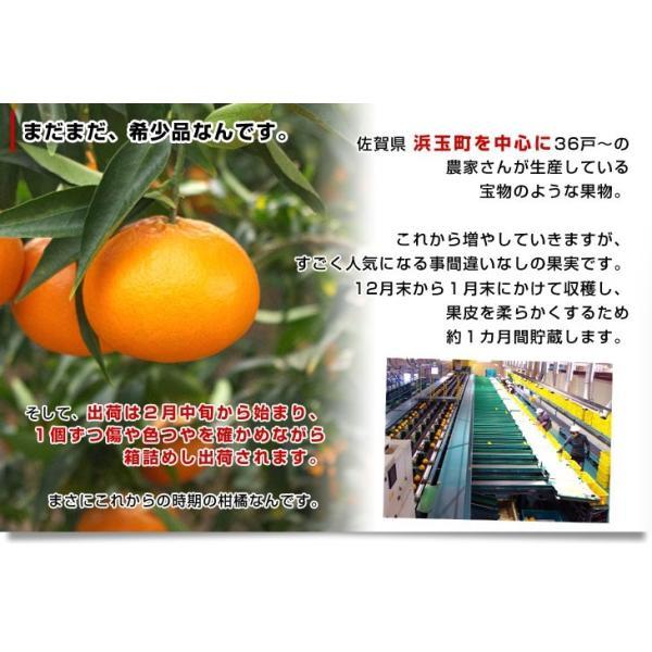 佐賀県より産地直送 JAからつ はまさき ご家庭用 ちょっと訳あり LからSサイズ 約2.5キロ (12から18玉前後)  送料無料 柑橘 オレンジ みかん sanchokudayori 06