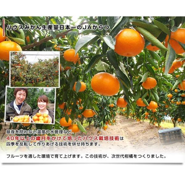 佐賀県より産地直送 JAからつ はまさき ご家庭用 ちょっと訳あり LからSサイズ 約2.5キロ (12から18玉前後)  送料無料 柑橘 オレンジ みかん sanchokudayori 07