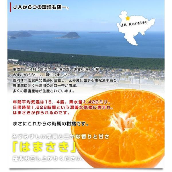 佐賀県より産地直送 JAからつ はまさき ご家庭用 ちょっと訳あり LからSサイズ 約2.5キロ (12から18玉前後)  送料無料 柑橘 オレンジ みかん sanchokudayori 08