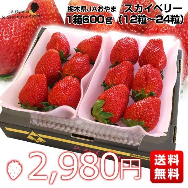 栃木県より産地直送 JAおやま スカイベリー 約300g×2P(6から12粒×2P) 送料無料 いちご イチゴ 苺  ※クール便発送|sanchokudayori|02