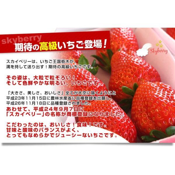 栃木県より産地直送 JAおやま スカイベリー 約300g×2P(6から12粒×2P) 送料無料 いちご イチゴ 苺  ※クール便発送|sanchokudayori|04