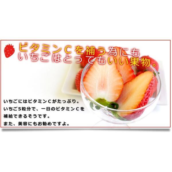 栃木県より産地直送 JAおやま スカイベリー 約300g×2P(6から12粒×2P) 送料無料 いちご イチゴ 苺  ※クール便発送|sanchokudayori|09