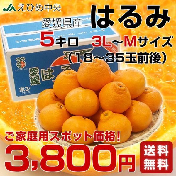 愛媛県産 JAえひめ中央 はるみ ご家庭用 3LからMサイズ 5キロ (18から35玉前後) 送料無料 柑橘 オレンジ 市場スポット|sanchokudayori|02