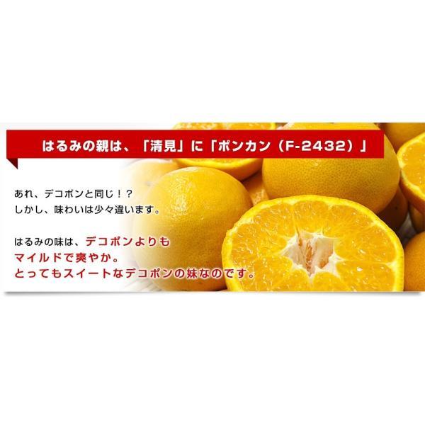愛媛県産 JAえひめ中央 はるみ ご家庭用 3LからMサイズ 5キロ (18から35玉前後) 送料無料 柑橘 オレンジ 市場スポット|sanchokudayori|04