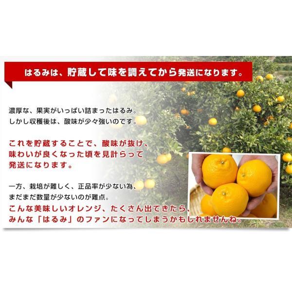 愛媛県産 JAえひめ中央 はるみ ご家庭用 3LからMサイズ 5キロ (18から35玉前後) 送料無料 柑橘 オレンジ 市場スポット|sanchokudayori|06