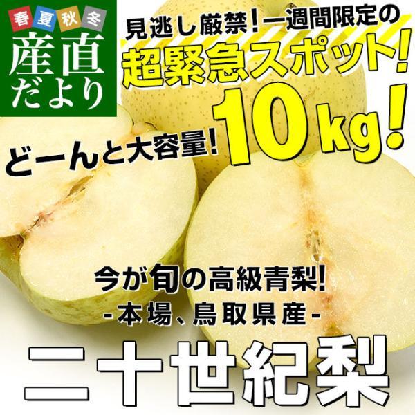鳥取県産 JA全農とっとり 二十世紀梨 秀品10キロ(28玉から32玉)なし ナシ 20世紀 送料無料 市場発送