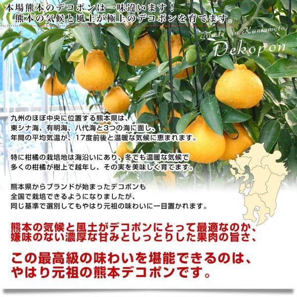 送料無料 熊本県産 JA熊本果実連 露地栽培デコポン 2LからLサイズ 3キロ (12から15玉)柑橘 オレンジ 市場スポット|sanchokudayori|05