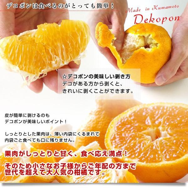 送料無料 熊本県産 JA熊本果実連 露地栽培デコポン 2LからLサイズ 3キロ (12から15玉)柑橘 オレンジ 市場スポット|sanchokudayori|06