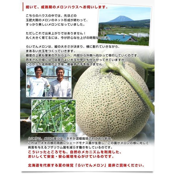 北海道産 JAきょうわ らいでんメロン 赤肉 1玉 1.3キロ めろん 夏ギフト お中元ギフト 市場スポット sanchokudayori 08