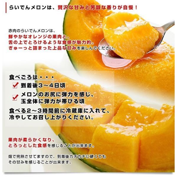 北海道産   JAきょうわ らいでんメロン 赤肉 2玉 1.3キロ×2玉 めろん 夏ギフト お中元ギフト 市場スポット|sanchokudayori|04