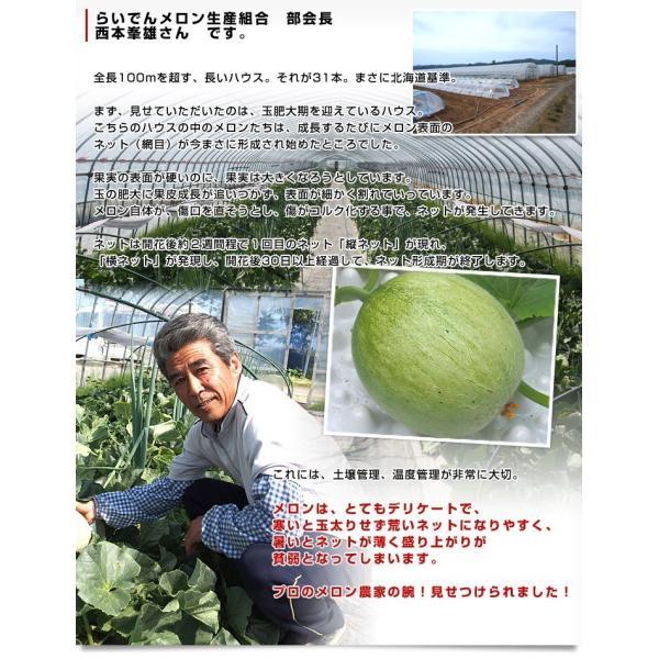 北海道産   JAきょうわ らいでんメロン 赤肉 2玉 1.3キロ×2玉 めろん 夏ギフト お中元ギフト 市場スポット|sanchokudayori|07