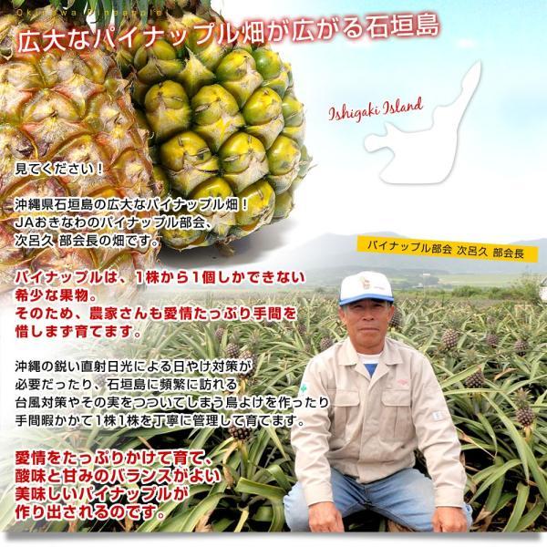 送料無料 沖縄県より産地直送 JAおきなわ 石垣島のボゴールパイン3玉セット 約1.8キロ(1玉600g前後×3玉)パイナップル|sanchokudayori|05