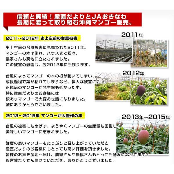 沖縄県より産地直送 JAおきなわ 新品種マンゴー 夏小紅(なつこべに)2Lから4Lサイズ 優品 約2キロ (4玉から5玉入) 送料無料|sanchokudayori|05