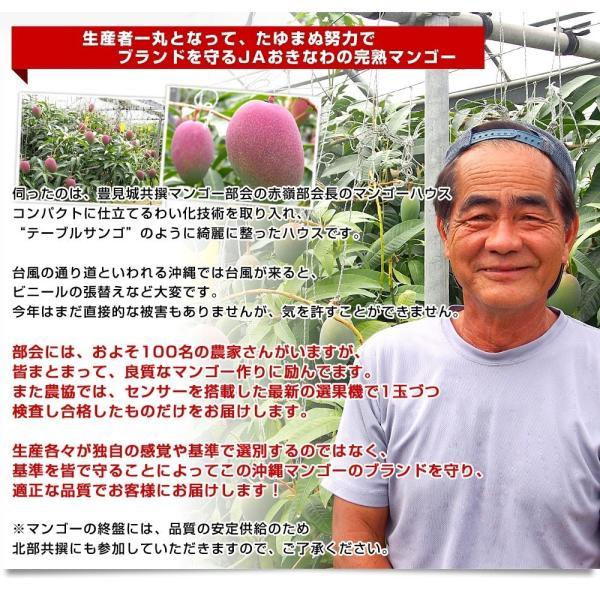 沖縄県より産地直送 JAおきなわ 新品種マンゴー 夏小紅(なつこべに)2Lから4Lサイズ 優品 約2キロ (4玉から5玉入) 送料無料|sanchokudayori|07