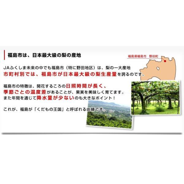 送料無料 福島県より産地直送 JAふくしま未来の梨 5キロ(10玉から16玉) なし ナシ sanchokudayori 04