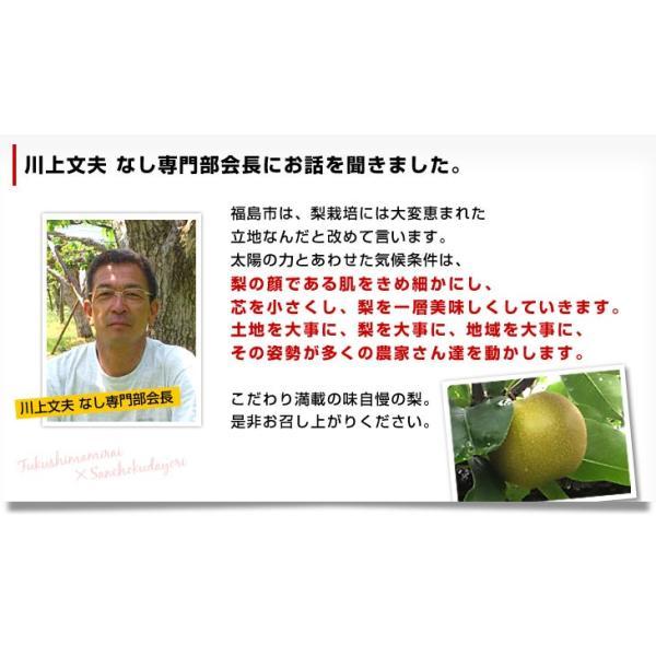送料無料 福島県より産地直送 JAふくしま未来の梨 5キロ(10玉から16玉) なし ナシ sanchokudayori 06