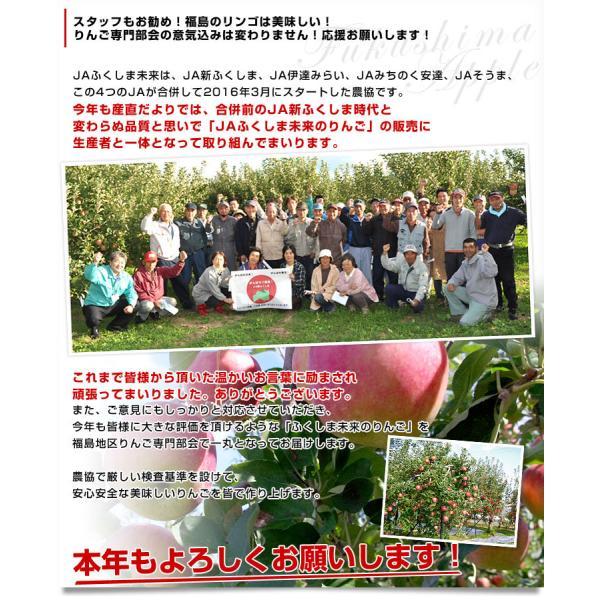 送料無料 福島県より産地直送 JAふくしま未来  サンふじりんご 特秀品 約2.5キロ(7玉から10玉)|sanchokudayori|04