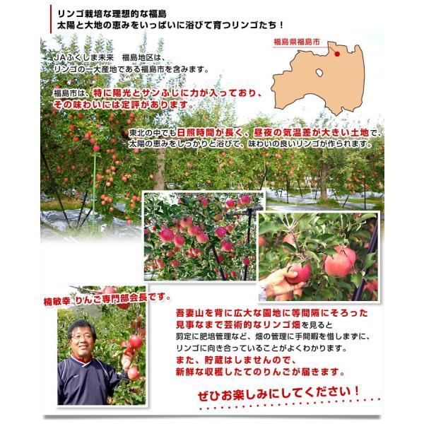 送料無料 福島県より産地直送 JAふくしま未来「サンふじりんご」特秀品 2.5キロ(7玉から10玉) 林檎 リンゴ|sanchokudayori|05