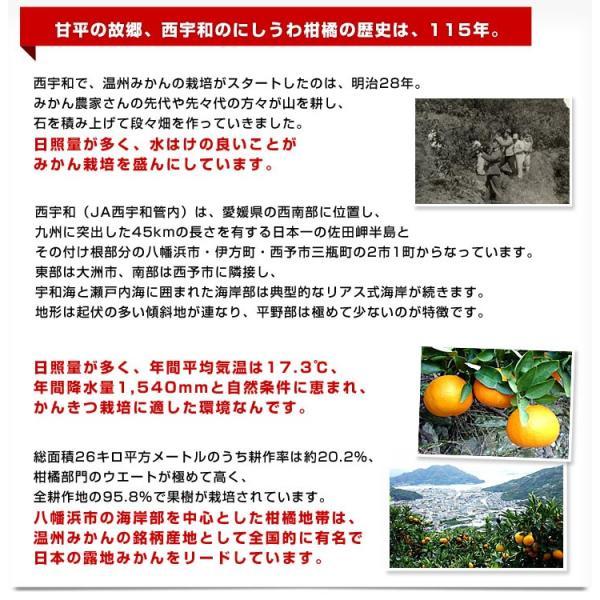送料無料 愛媛県より産地直送 JAにしうわ 甘平(かんぺい) ちょっと訳あり Lから3Lサイズ 3キロ(10から15玉)|sanchokudayori|05