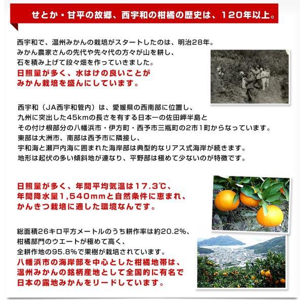 送料無料 愛媛県より産地直送 JAにしうわ ちょっと訳あり 甘平(かんぺい)&せとかセット Lから3Lサイズ 各3キロ×2箱|sanchokudayori|09