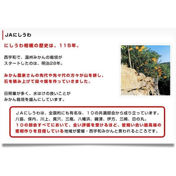 送料無料 愛媛県より産地直送 JAにしうわ しらぬひ 小玉 Mサイズ 5キロ(28玉前後)不知火 しらぬい|sanchokudayori|07