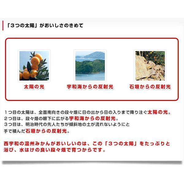 送料無料 愛媛県より産地直送 JAにしうわ しらぬひ 小玉 Mサイズ 5キロ(28玉前後)不知火 しらぬい|sanchokudayori|09