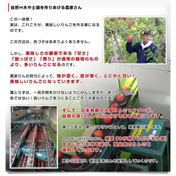 お一人様2箱まで! 送料無料 JAつがる弘前 葉とらず太陽ふじりんご 糖度13度以上 約3キロ(9から13玉) 林檎 りんご リンゴ|sanchokudayori|04
