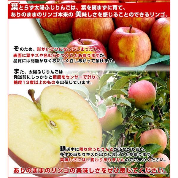 お一人様2箱まで! 送料無料 JAつがる弘前 葉とらず太陽ふじりんご 糖度13度以上 約3キロ(9から13玉) 林檎 りんご リンゴ|sanchokudayori|06