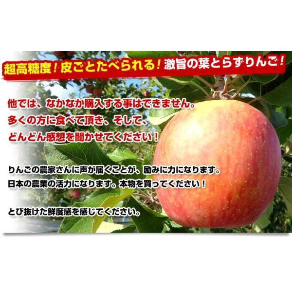 送料無料 青森県より産地直送 JAつがる弘前 葉とらず太陽ふじりんご 糖度13度以上 約3キロ×2箱(9から13玉×2箱) 林檎 りんご リンゴ|sanchokudayori|03