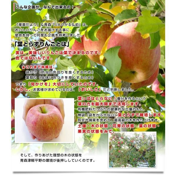 送料無料 青森県より産地直送 JAつがる弘前 葉とらず太陽ふじりんご 糖度13度以上 約3キロ×2箱(9から13玉×2箱) 林檎 りんご リンゴ|sanchokudayori|04