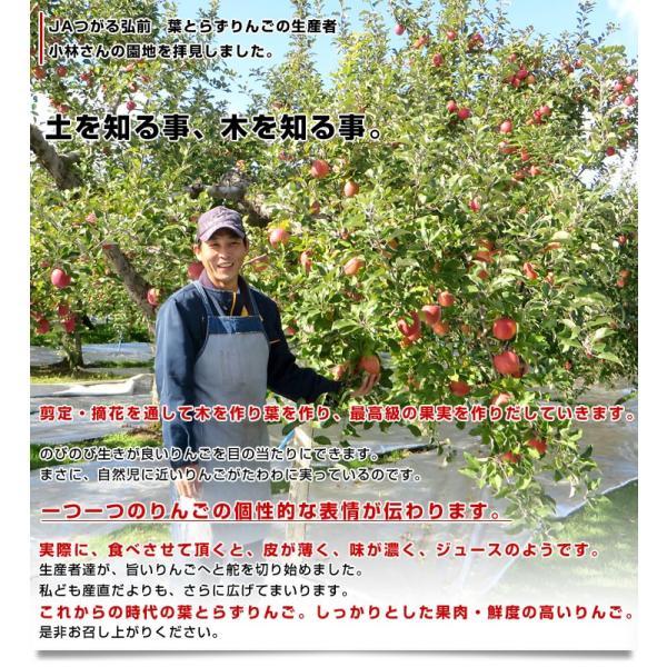 送料無料 青森県より産地直送 JAつがる弘前 葉とらず太陽ふじりんご 糖度13度以上 約3キロ×2箱(9から13玉×2箱) 林檎 りんご リンゴ|sanchokudayori|06