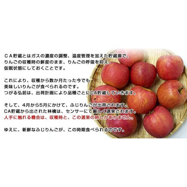 青森県より産地直送 JAつがる弘前 ふじ (有袋栽培) CA貯蔵品 約3キロ (9から13玉) 送料無料 りんご リンゴ 林檎|sanchokudayori|03