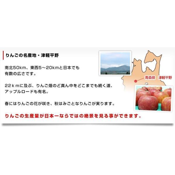 青森県より産地直送 JAつがる弘前 ふじ (有袋栽培) CA貯蔵品 約3キロ (9から13玉) 送料無料 りんご リンゴ 林檎|sanchokudayori|05