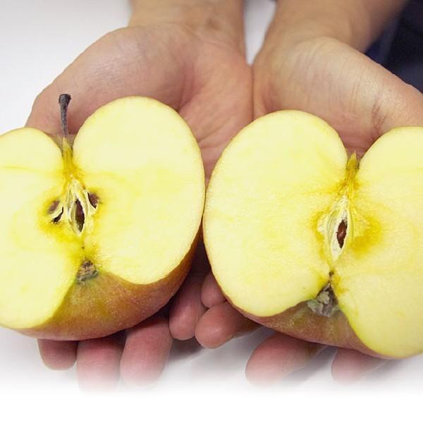 青森県より産地直送 JAつがる弘前 ふじ (有袋栽培) CA貯蔵品 約3キロ (9から13玉) 送料無料 りんご リンゴ 林檎|sanchokudayori|06